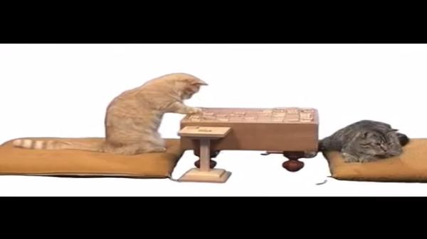 待った!?将棋を指す猫が頭良すぎてビックリ!?