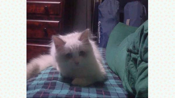 若さいっぱい!飛び跳ねたり猫パンチして遊ぶ猫のあどけなさが可愛い♪