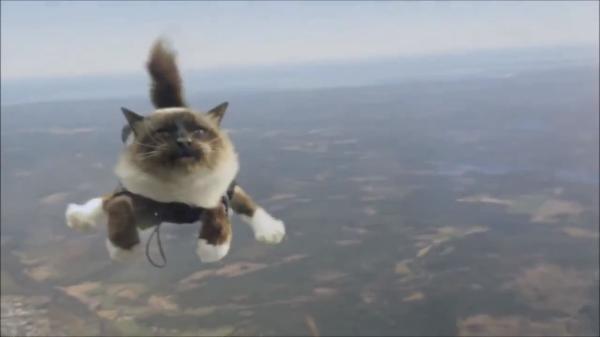 まさか猫が飛んでいる!?スカイダイビングをする猫たちが凄すぎwww