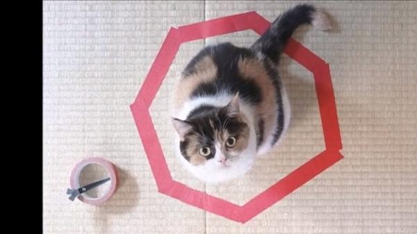 新しい猫捕獲システム!猫ホイホイが斬新!?