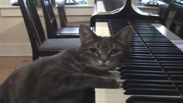 天才ピアノ猫がすごすぎる…!素敵な演奏でみんなを魅了するにゃ♪