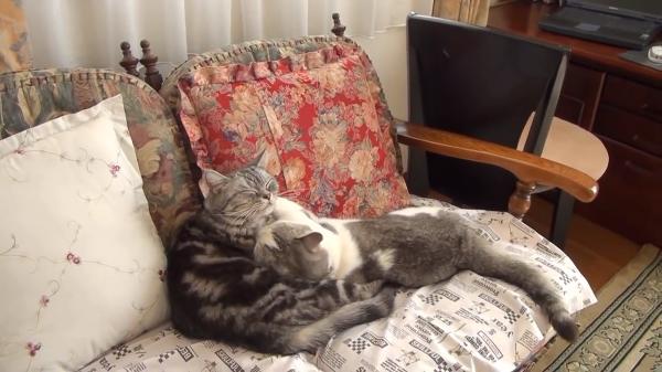 被災した猫の物語。大きな不安を抱えても懸命に生きている姿が健気…
