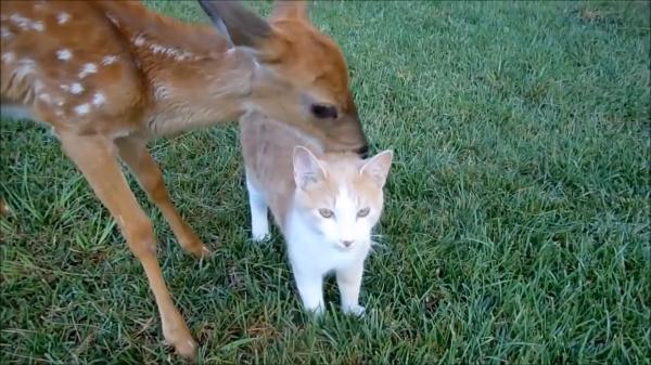 猫はみんなの人気者♪鹿からもモテモテ♪