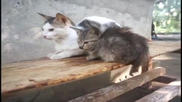 まさに四面楚歌!ネズミを取り囲む猫達の視線が怖い…(汗)