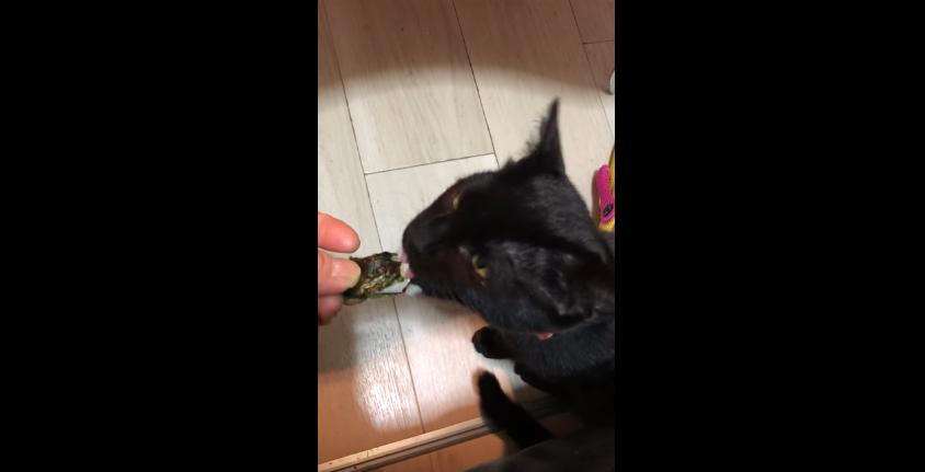喉に詰まらせないかちょっと心配(汗)お餅を初めて食べる猫