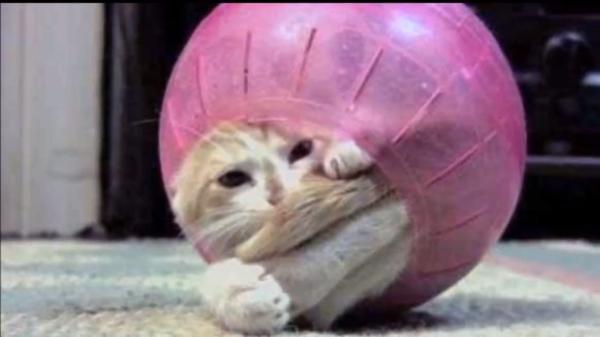 大爆笑!どうしてそうニャルの~!?はまり込んで抜け出せなくなった猫たち