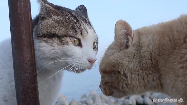 一発触発!!威嚇しあう猫の顔が近すぎて怖いwww