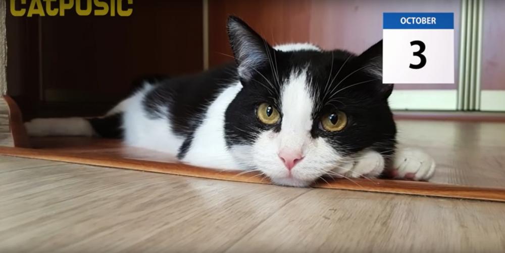 パパが帰ってくるまでお留守番!帰ってきた後は全力で愛情表現をする猫ちゃんが可愛い。
