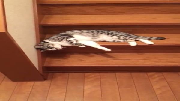 川の流れのようにだる~んと階段を下りてくる猫www