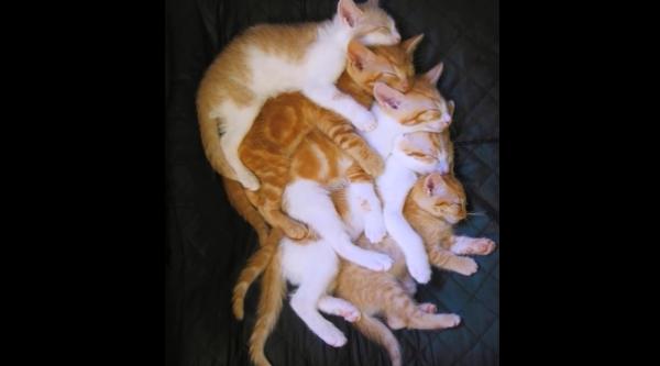 可愛すぎるっ♡大好きな友達を後ろからギュっとハグする猫ちゃんたち♪