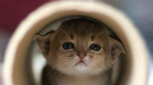 ネコ好き必見!ネコがあなたから隠れる本当の理由とは一体…!?