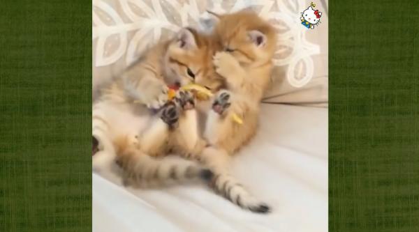 面白い猫の行動…♡あんな事をする猫やこんな事をする猫ちゃんたち♪