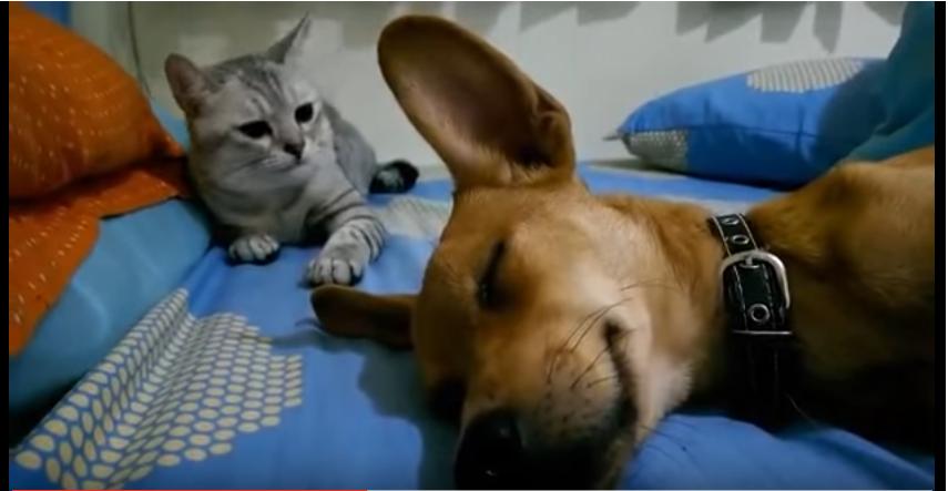 【衝撃】気に入らないにゃぁっあ!!なに寝てるんだよっ!