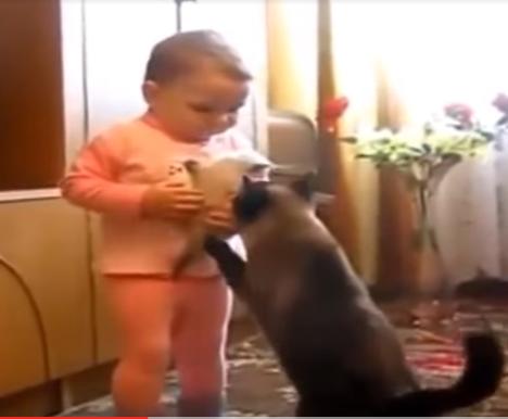 母は強し!!♡赤ちゃんから我が子を取り戻す母猫に拍手!