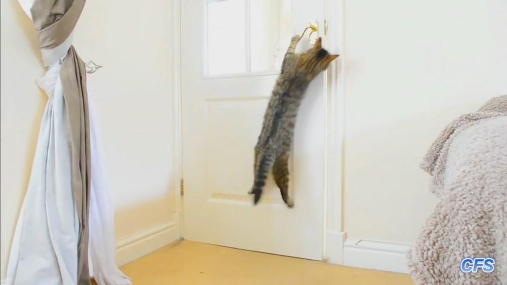 まるでディ○ニ-映画!?賢くって自分でドアを開けちゃう猫ちゃんたち!