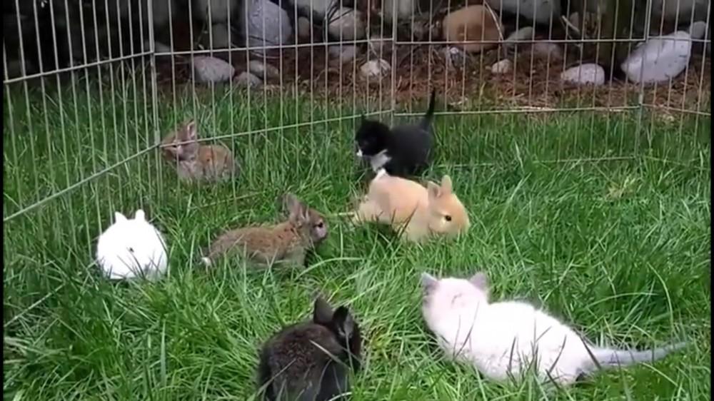 ちびっこネコ&ウサギの野原でのほほん追いかけっこ~♡