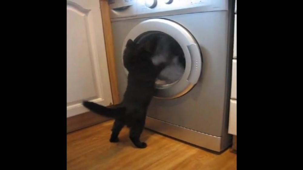 ドラム式洗濯機にくぎづけの猫さんの仁王立ちっぷりに萌える…