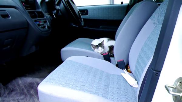 どうしてそこに!?車の中で猫が寝てるんですけどー!