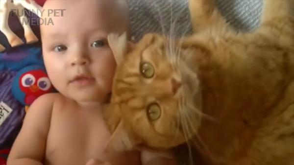 赤ちゃんが愛しすぎる猫ちゃん達♡