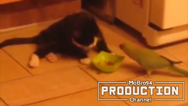 猫VS鳥、猫VSねずみ!びびりまくりの猫ちゃんたちが可愛すぎる(笑)