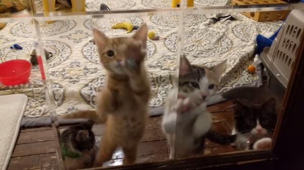 高速おねだり!!ガラスをシャカシャカする子猫たちが可愛すぎるwww