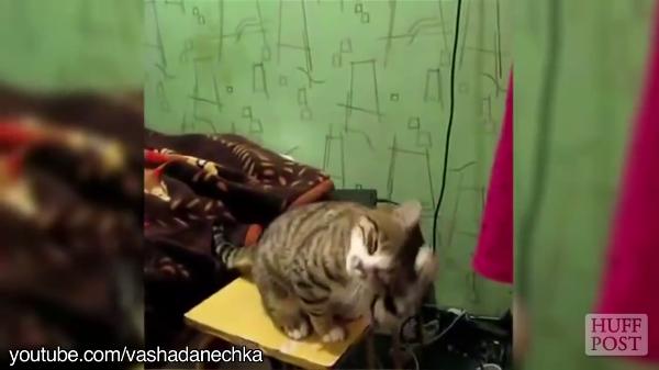 「ほら、こうやって撫でるんだよ?やってみて?」なでなでを人間に訓練する猫たち!