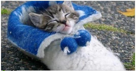 理解できない猫の行動『やっぱり猫は靴が好き』かわいいから許す♡