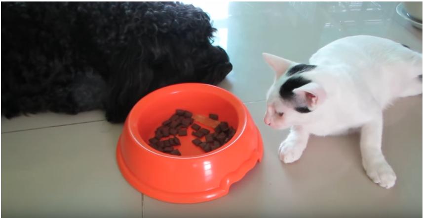 抜群の演技力でおやつをくすねる猫ちゃん『ひとつくらいかまわないよね?』