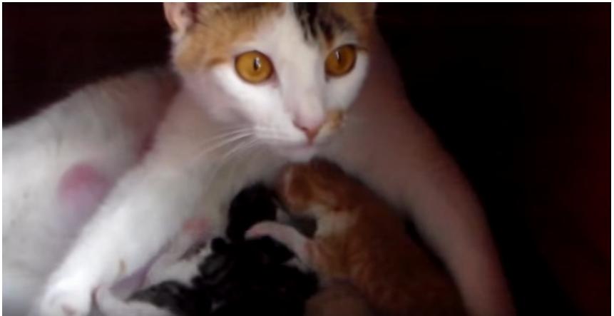 仲良しワンちゃんに鋭い猫パンチ!警戒心MAXのそのわけは・・・
