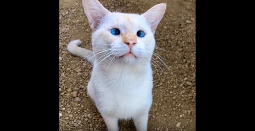 『しっぽのケガを治さなきゃ!』フードパークの名物猫