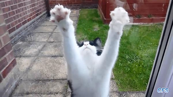 「開けて〜〜!」締め出された猫達の開けてが色々