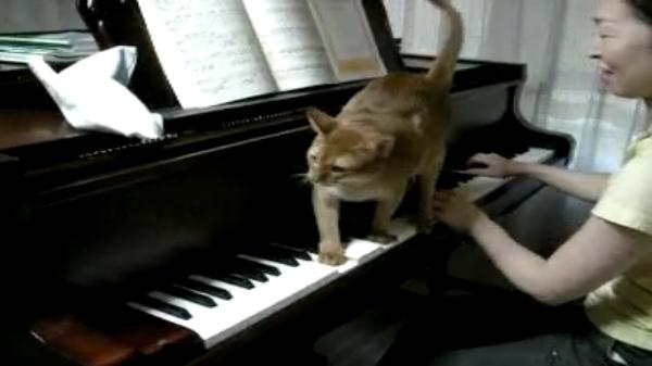 飼い主さんと一緒に情熱的なピアノ演奏をする猫ちゃん!て、いうか邪魔〜ww