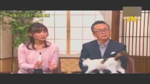 ニュース番組に猫が出演!?『田勢康弘の週刊ニュース新書』看板猫の「にゃーにゃ」がいっぱい♪