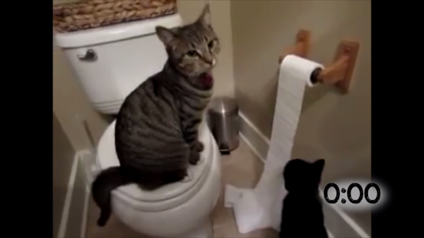 怒られてもやめられないにゃ♪トイレットペーパーで遊ぶイタズラ猫ちゃんたち