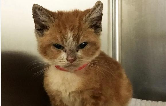 『子猫を助けたい!』獣医師たちと保護猫の1か月