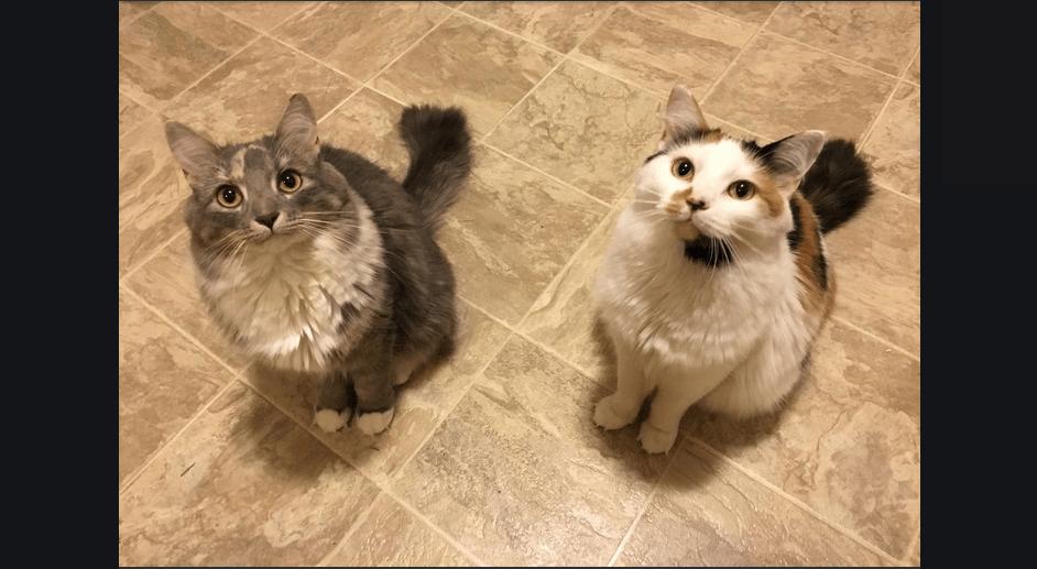 野良猫が2匹の子猫を連れてきた『わたしの子猫を助けて!』