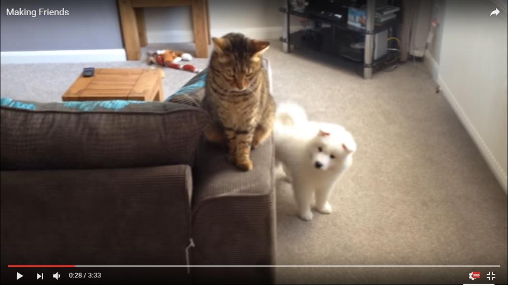 友達できた!初めは受け入れられなかったワンちゃんの必死のアピールに心を開いていく猫ちゃん…二匹の関係が感動的すぎる