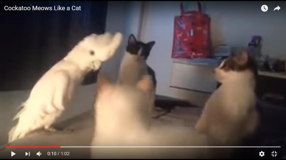 猫会議に鳥さん乱入!?しかもニャーニャー鳴く鳥に猫たちビビりまくり(笑)