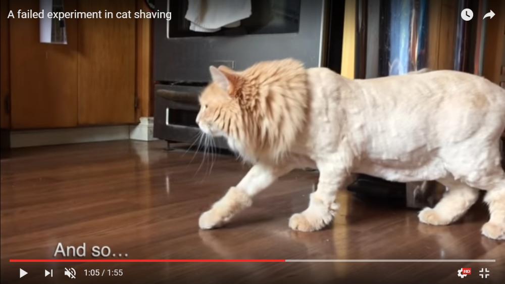 なにそれぇ、っていうか誰にゃ?突然兄猫がサマーカットでライオンのようになってしまい戸惑いを隠せない妹猫(笑)