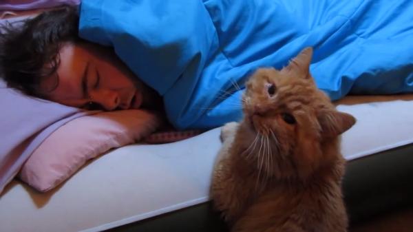 飼い主さん起きないにゃ…つまらないにゃ…そっと寝ている飼い主さんを見守る猫ちゃん