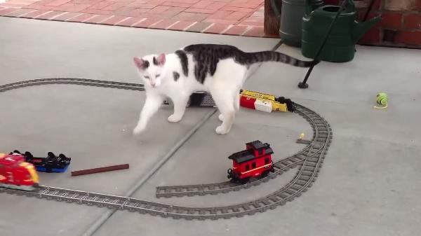 猫ちゃんたちVSおもちゃの電車!!動いている電車にじっとはしていられない猫ちゃんたち(笑)