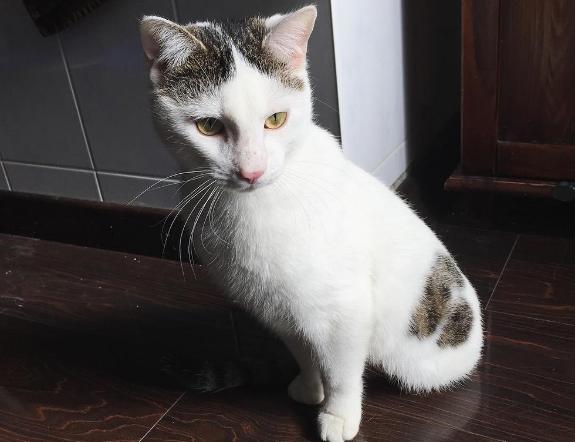 2本足で生まれたぼくは、誰よりも早く走る元気な子猫