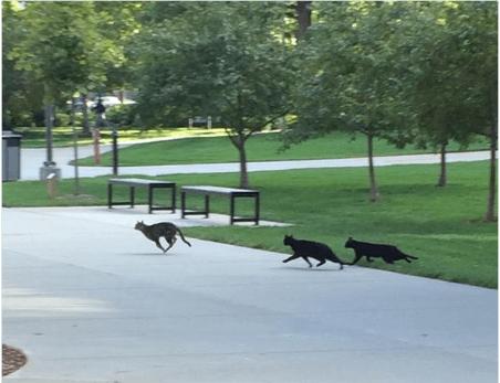 猫といっしょの学園生活♪キャンパスに猫が暮らすネブラスカ大学