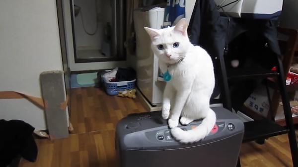 猫vsおれ!フタを開けてもすかさず猫に閉められる激闘がおもしろすぎるww