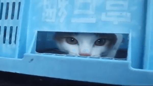 飼い主さんと一緒に出勤した猫ちゃん。帰宅時間になっても遊んでて捕まらない猫ちゃんにとった荒技とは!!