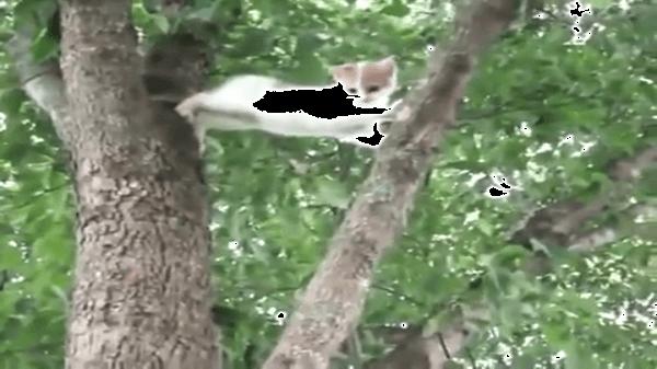 さすがはママ猫!!登った木から降りれなくなった子猫を助けに行ったママ猫がカッコイイ〜☆