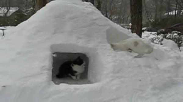 入り口2つに階段付き!雪で作った猫用かまくらが凄い!猫ちゃんたちも大はしゃぎ☆