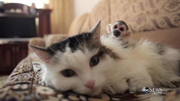 育児放棄された子ザルを見守る猫…種別を超えた愛が感動的すぎる