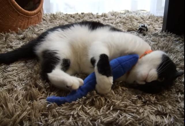 いい?よぉ~く見てるのよ!これが猫式サンマの締め方よ