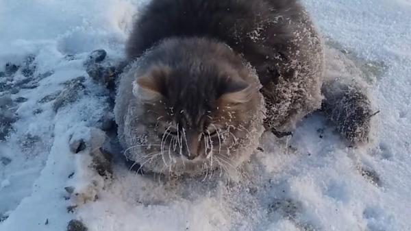 雪と猫…えっ!?足が凍って動けない!?親切なカップルに救出されましたー!